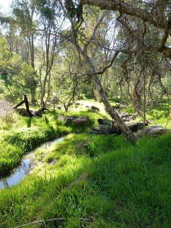 ovens natural park campground reviews